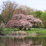 Sonnenberg_tree_restoration