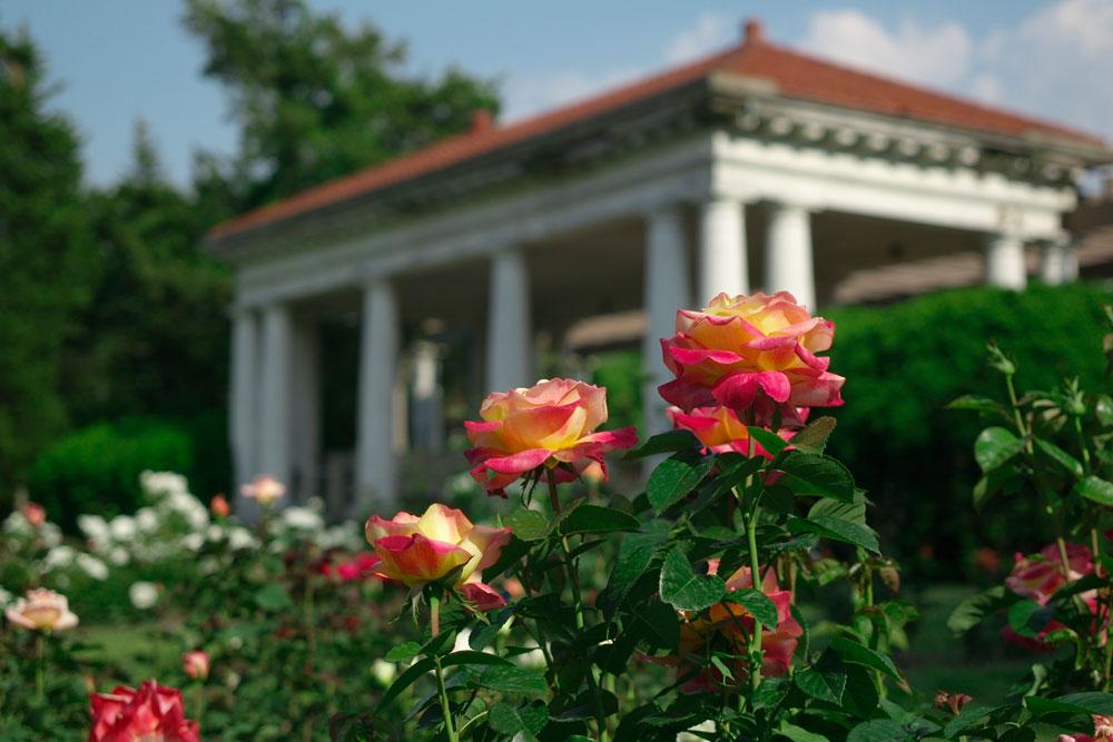 rosegarden-belvedere