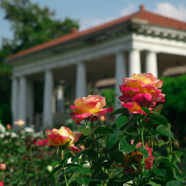 rosegarden-SQ