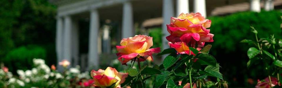 03-rosegarden-belvedere-Header-web-960x300_c