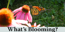 Bloom Schedule