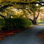 Autumn splendor at Sonnenberg