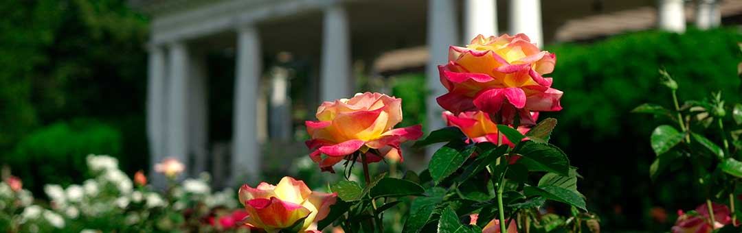 rosegarden-belvedere-Header-web